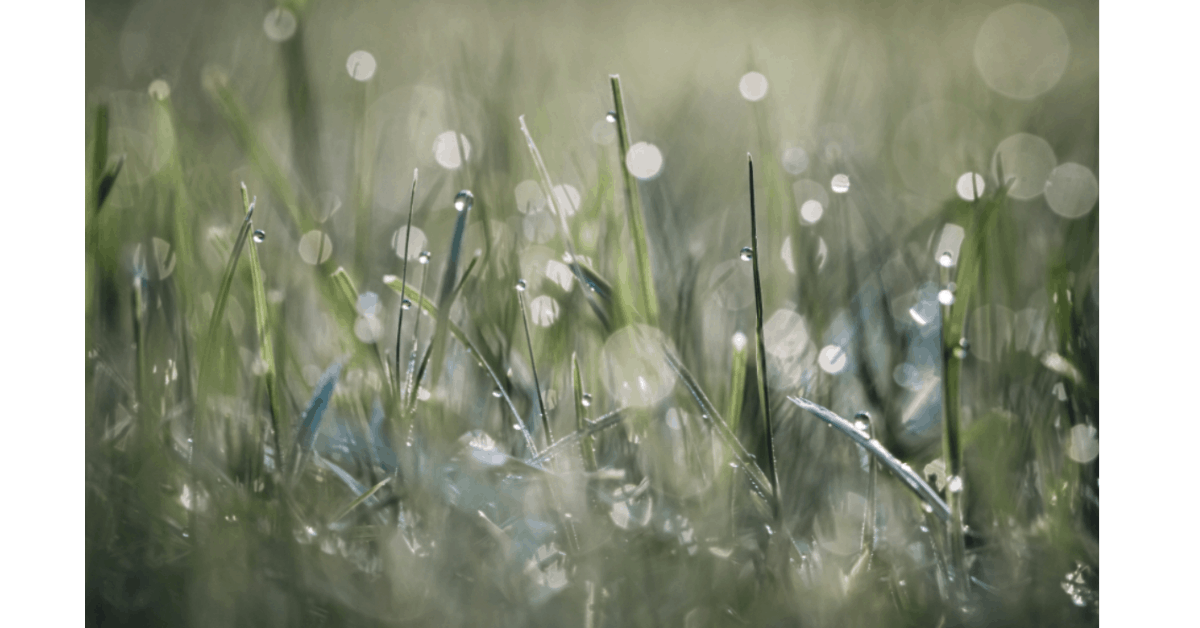 Picture of grass from Stocksnap.io